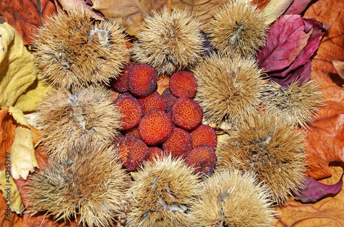 arbutus from a group of nuts and dried leaves