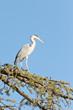 A Crane on a tree