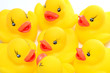 team of yellow rubber duck