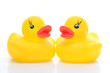 couple of yellow rubber duck - front
