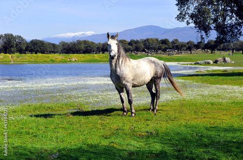 Dehesa de Extremadura en primavera
