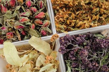 Plantes médicinales pour la médecine douce et  la phytothérapie