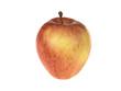 Red Sonya Apples