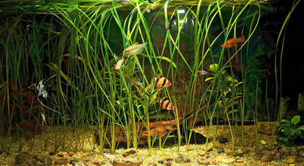 aquarium with many fish and natural plants .120 L tank water