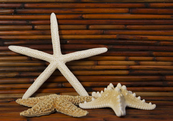 starfish with bamboo in background