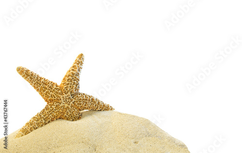 single starfish on a sand hill