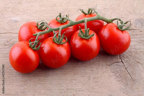 Coktailstrauch Tomaten