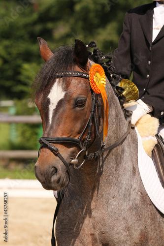 Staande foto Paardrijden pferdeportrait