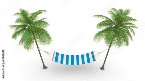 Two palm and hammock
