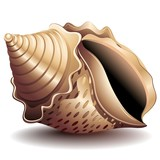 Conchiglia-Seashell-Vector