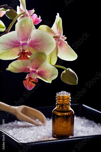 Fototapeten,schön,blume,öl,orchidee