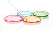 Petri dishes with a colored liquids, isolated