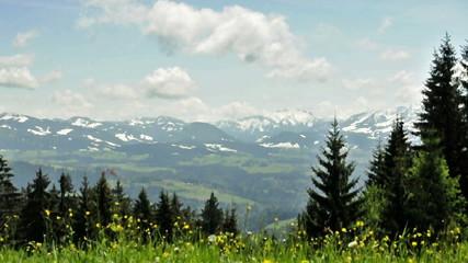 Butterblumen im Wind - Blick von Pfänder / Österreich - Loop