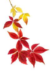 Schönes Arrangement aus Herbstblättern