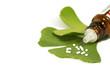 Leinwanddruck Bild - Ginkgo mit Globuli
