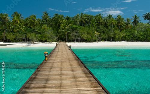 Fototapeten,strand,web,maldives,palme
