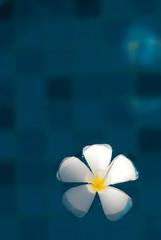Floating plumeria