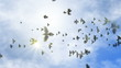 animated flying flock of pigeons on the clear sky