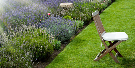Lavender garden in the morning