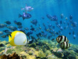 Shoal of tropical fish over a coral reef