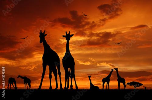 Fototapeten,afrika,tier,wolken,colour