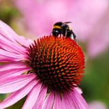 Fototapete Naturheilmittel - Medizin - Blume