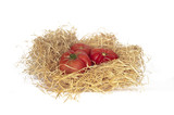 Tomatoes on straw isolated