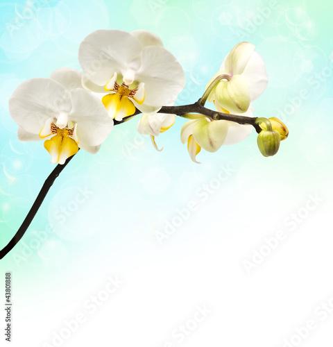 Fototapeten,orchidee,blume,verwischen,hintergrund