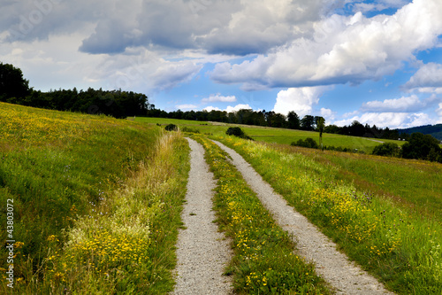 rural road in flowering meadows