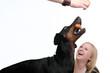 Dobermann schnappt nach Würstchen