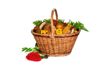 Basket full of different mushrooms isolated on a white