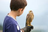 a youngster holding a hawk poster