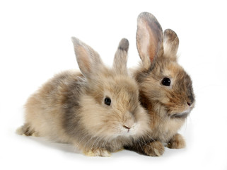 Two rabbits bunnies isolated on white