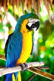 parrot - 43815405