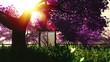 Mysterious Cherry Blossoms Japanese Garden cartoony 3D render