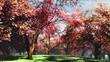Japanese Garden Cherry Blossoms Tree 3D render