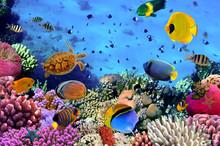 Zdjęcie z koralowców kolonii