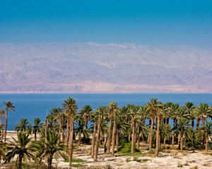 Palm Trees at the Dead Sea
