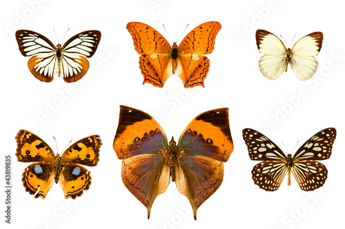 Butterfly isolated on white background.