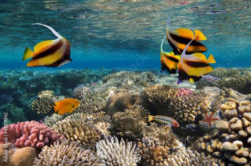 Fototapeta Photo of a coral colony