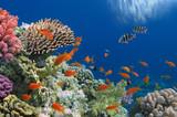 Fototapete Hintergrund - Schönheit - Fische