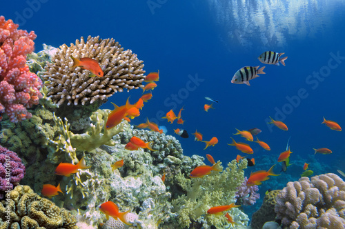 Tropical Fish on Coral Reef in the Red Sea