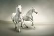 Obrazy na ścianę i fototapety : White horses