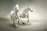White horses - 43823423