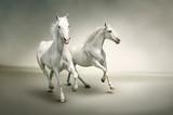 Fototapety White horses