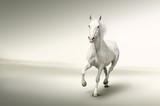 Fototapete Arabian - Kunst - Haustiere