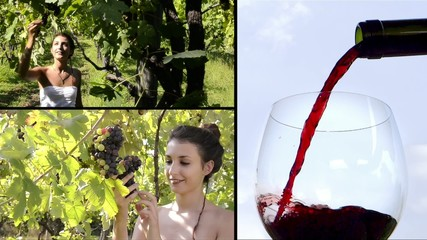 vines and wine