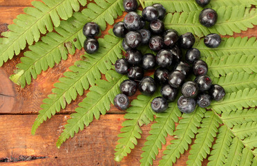 Blueberries on fern on wooden background close-up