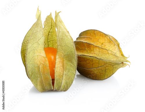 Physalis fruit isolated on white