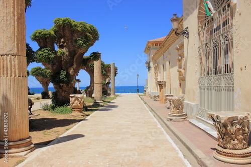 Fotobehang Algerije Allée